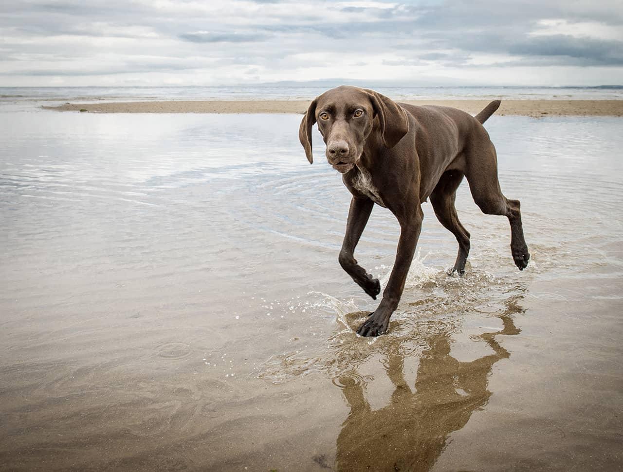 Dog Photo Gallery Man S Best Friend