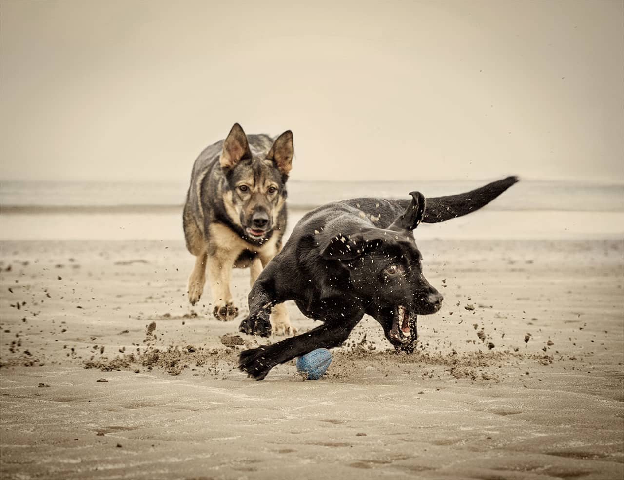 Action Dog Photography